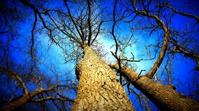 Low angle view of barren trees Stock Photo