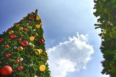 Low angle view of big Christmas trees and cloud sky in the background. Christmas festival outdoor stock image