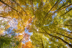 Low angle view of a big tree Stock Images