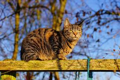 Low Angle View of Cat Royalty Free Stock Image