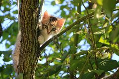 Low Angle View of Cat on Tree Stock Photos