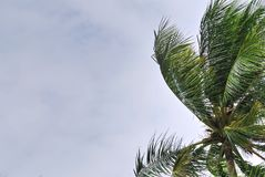 Low Angle View of Coconut Tree Against Cloudy Sky Royalty Free Stock Photos