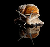 Low angle view of crawling snail Royalty Free Stock Photography