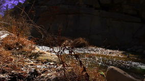 Low Angle View of Creek stock video footage