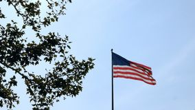 Low angle view of the flag of United States of America waving in the wind near a green tree on a blue sky background. Low angle view of the flag of United stock footage