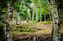 Low angle view of forest trees and roots. Nature green wood back. Grounds Stock Photos
