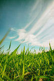 Low angle view of fresh grass against blue sky with clouds. freedom and renewal concept Royalty Free Stock Photography