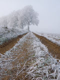 Frozen farm track Stock Images