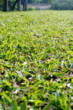 Low angle view of grass field Stock Images