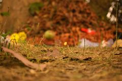 Low angle view of grass path with dry leaves royalty free stock photo