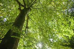 Low angle view of green leaves Royalty Free Stock Photo