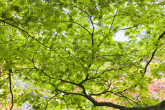 Low angle view of the green leaves Royalty Free Stock Images