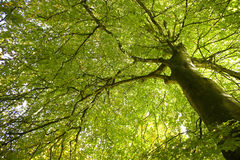 Low angle view of green leaves Stock Photos