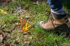 ground level view of hiking boot in fall Stock Image