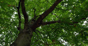 Low angle view of lush green tree stock video footage