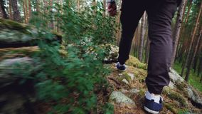 Low angle view of male tourist`s legs walking in forest on grass among trees stepping on rocks and pine cones. Trekking stock footage