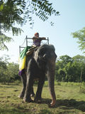 Low Angle View Of Man Riding On Elephant Royalty Free Stock Images