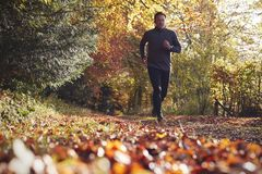 Low Angle View Of Mature Man Running Through Autumn Woodland stock images