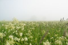 Low angle view of meadov in foggy morning Stock Photo