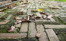 Low angle view of a old brick background Stock Image