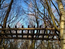 Low angle view of an old wooden fence high in the trees against blue sky Stock Photos