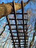 Low angle view of an old wooden fence high in the trees against blue sky. In autumn Stock Images