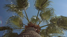 Low angle view of palm stock footage
