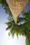 Low angle view of palm tree Stock Photo