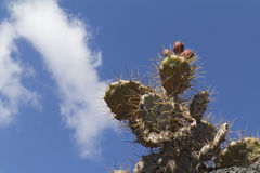 Low angle view on a part of cactus Royalty Free Stock Images