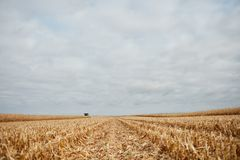 Low angle view between rows of cut corn stubble Stock Images