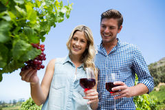 Low angle view of smiling couple holding winnglasses at vineyard Royalty Free Stock Photos