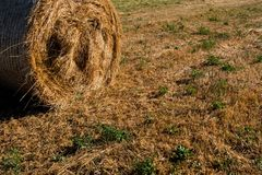Low angle view of straw on the meadow stock images