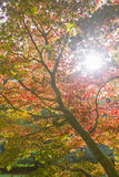 Low angle view of the sun and autumn leaves Stock Images