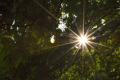 Low Angle View of Sun Shining Through Trees Royalty Free Stock Photography