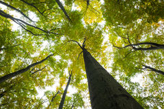 Low angle view of tall trees Stock Images