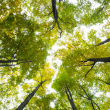 Low angle view of tall trees. Against the sky Stock Photos