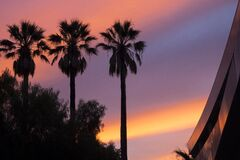 Low Angle View of Three Palm Trees during Sunset Stock Images