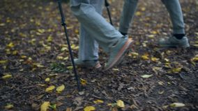 Low angle view of tourists trying Nordic walking in the wood. Autumn mood.Low angle view of tourists walking in the forest and trying Nordic walking while having stock footage