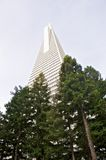 Low angle view of the Transamerica Pyramid San Francisco designed by William Pereira Stock Photography