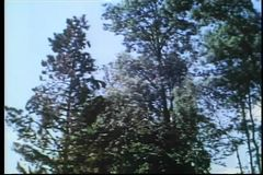 Low angle view tree falling stock footage