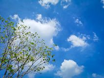 Low Angle View of Tree with A Few Leaves Against Blue Cloudy Sky. At Day Time royalty free stock photos