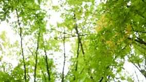 Low angle view of trees in the forest. Our environment. Low angle of green bright trees in the forest stock video footage