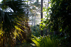 Low angle view through tropical forest Royalty Free Stock Photography