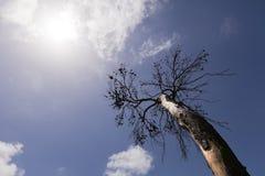 Burnt Tree & Sun Stock Photos