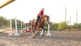 Professional rider on a horse jumps over a barrier. Low angle of a young professional rider on a brown horse training jumping over obstacles. Slow motion. Sunset stock footage
