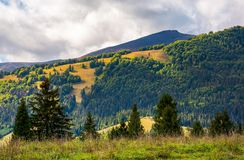 Low clouds above the forested hill in sunlight. Beautiful scenery of Carpathian Borzhava mountain ridge. lovely autumnal background stock photos