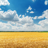 Low clouds in blue sky over golden field Stock Image