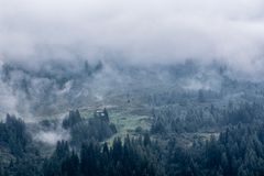 Low clouds on mountains, conifer forest covered by fog and cloud Stock Image