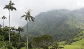 Beautiful landscape in Valle de Cocora, Salento, Colombia Royalty Free Stock Images