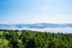Low clouds skimming tops of evergreen trees Stock Image